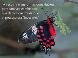 As vezes as transformações doem...mas depois que mudamos nos damos conta de que o processo era necessário
