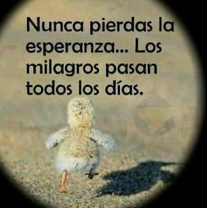 Nunca perca a esperança, milagres acontecem todos os dias